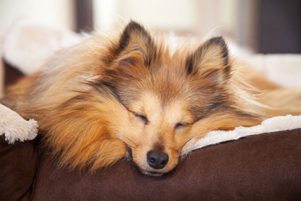Kuscheliges Hundebett
