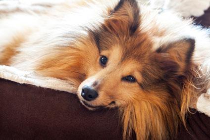 Vorteile von einem kuscheligen Hundebett
